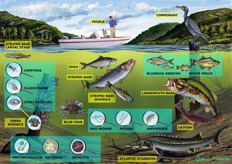 Freshwater Ecosystems For Kids Wwwimgkidcom The