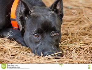 Orange County Humane Society Shelter Animal Shelter ...