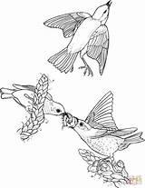 Coloring Colorir Bluebird Template Desenhos Birds Orientais Mountain Desenho Passaros Eastern sketch template