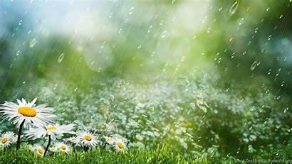 Rain Summer Wallpapers Desktop Background