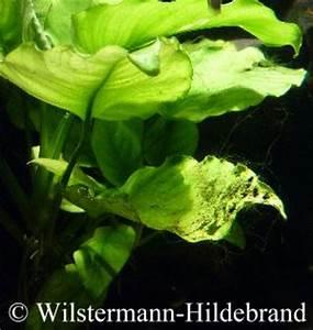Stickstoffmangel Bei Pflanzen : informationen f r aquarien neulinge ~ Lizthompson.info Haus und Dekorationen