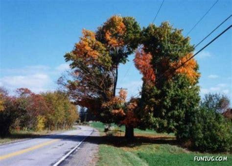 Amazing Trees  Dusky's Wonders