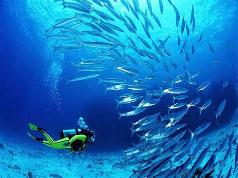 scuba diving musandam dubai holiday packages tropic