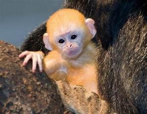 Unique Animals blogs: Cute Baby Animals 18, Baby Animals ...