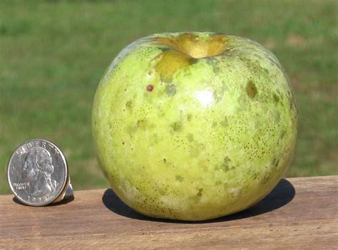 Century Farm Orchards: Apples for Wildlife