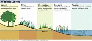 17 Best Images About Wetlands On Pinterest