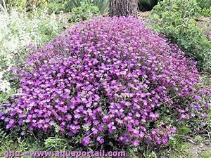 Plantes Vivaces Pour Massif : plante vivace d finition illustr e ~ Premium-room.com Idées de Décoration