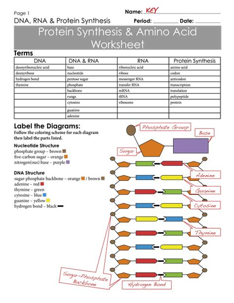 Protein Synthesis Worksheet Exercises Keypng  Science  Pinterest  Worksheets, Teaching