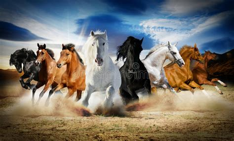 years  horse stock image image  gallop emotions