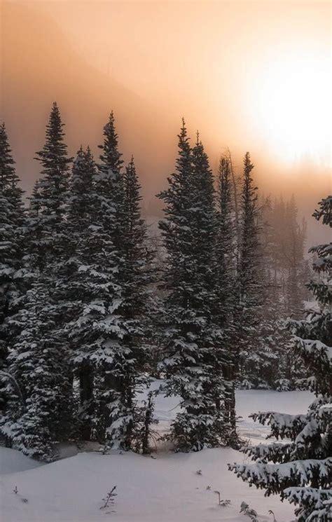 Pin by Shash on Winter Wonder Lands Winter landscape