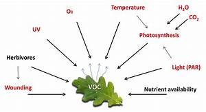 De-mystifying the study of volatile organic plant ...