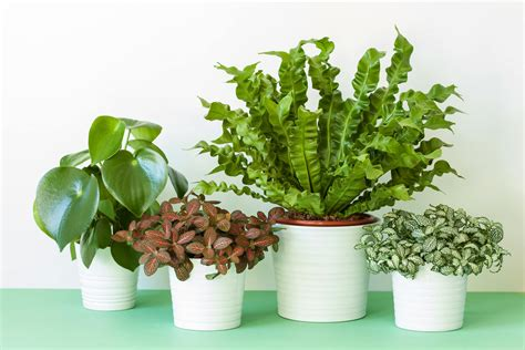 houseplant identification tips caring for houseplants