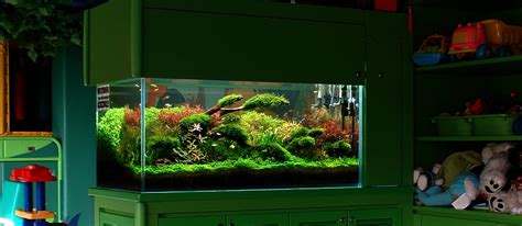 k w aquarium club club aquarium shoreditch club aquarium shoreditch plus grand