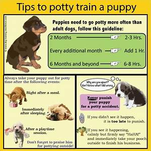 25 best ideas about puppy training schedule on pinterest With trouble potty training dog