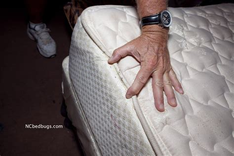 what to look for in a bed what do bed bugs look like 53 pictures of bed bugs pest strategies
