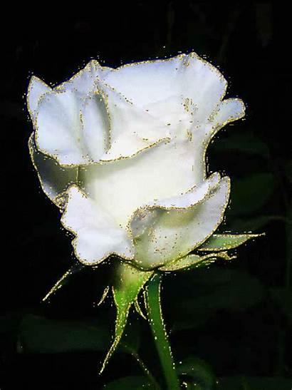 Rose Blanche Roses Centerblog Une Fleur Marie