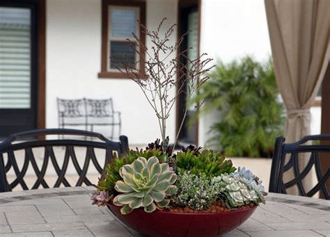 how to make a succulent dish garden step by step