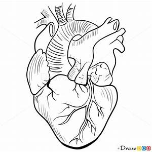 Human Heart Drawing Outline