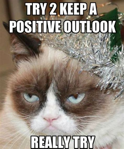 Grumpy Cat New Years Meme - new year s cat for more new years cats visit https www facebook com funholidaycats happy