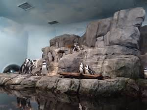 5 reasons to visit the monterey bay aquarium findingdoryevent 5 minutes for