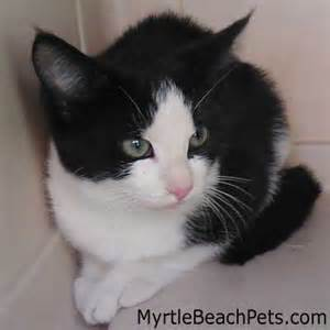 cats for free adoption myrtle pets help for myrtle pets and pet owners