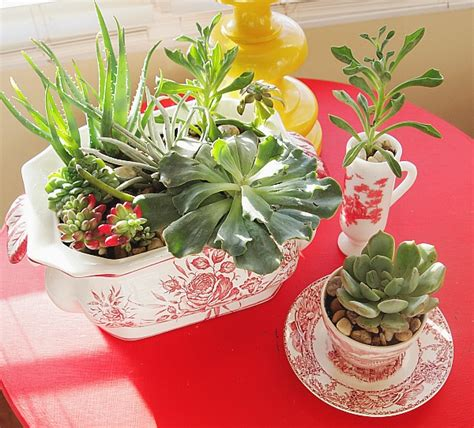 indoor succulents 25 indoor and outdoor succulent gardens of all sizes garden lovers club