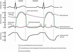 Clinical Electrocardiography And Ecg Interpretation  U2013 Ecg