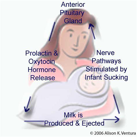 The Breastfeeding Triad Project The Basics