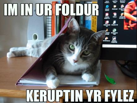 lolcats life quotes humor