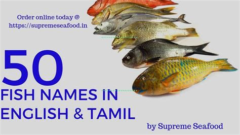 fish names  english tamil  varieties  supreme
