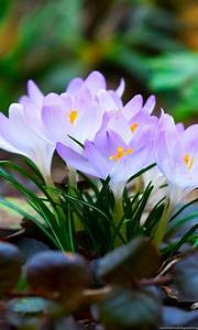 High, Resolution, Beautiful, Nature, Spring, Wallpapers, Hd, 9
