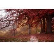 Redwood Forest Wallpaper Hd  HD Desktop Wallpapers 4k