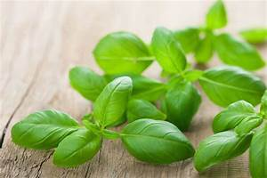 1 1/2 cups tightly packed fresh basil leaves | Fresh Beans ...