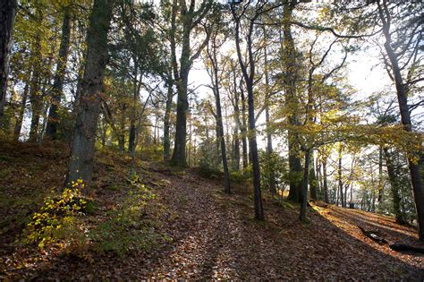 stock photo  autumn woodland scene freeimageslive