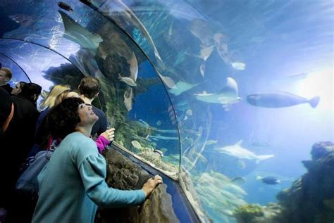 wowcher deal merlin events 163 15 instead of up to 163 27 for one ticket to sealife after at