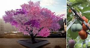 syracuse professor creates one tree that grows 40