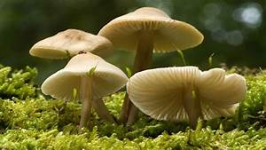 Woman Accidentally Poisons Her Whole Family With Wild Mushrooms