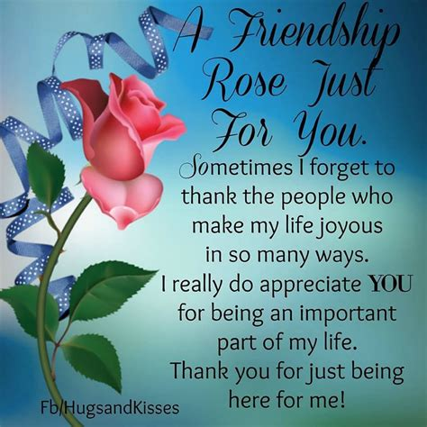 friendship rose    pictures