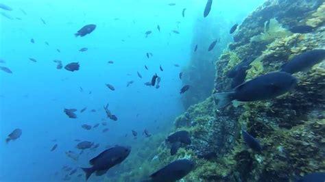 gopro ship rock catalina scuba diving youtube