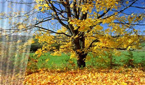 Maištinga siela: Eilės apie rudenį