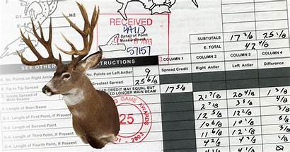 Blacktail Typical Non Record Deer Boone Crockett