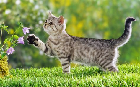 Cute Cat Wallpapers  Tips And Information Resources