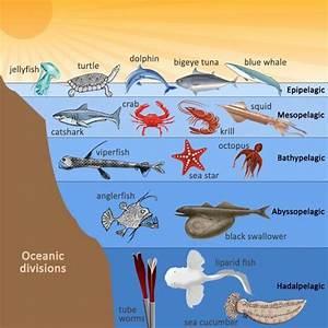 AlchemistClub - Ocean Ecosystem
