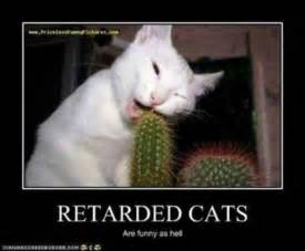 stupid cat stupid cats motivational posters and pictures