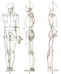 images  figure drawing proportions