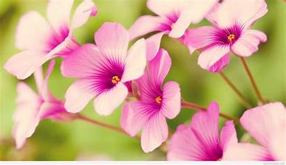 Flowers Spring Wallpapers Awesome Pixelstalk