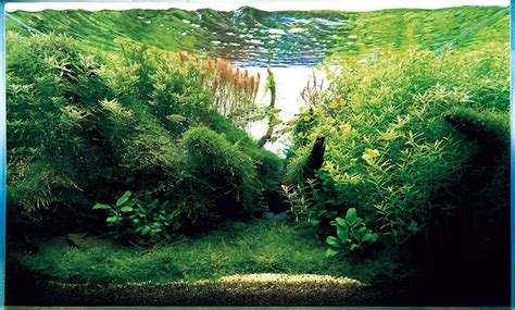 Ada Aquascape by Aquatic Aquascaping Aquarium