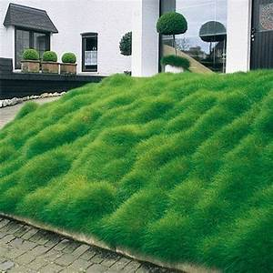 Hang Bepflanzen Bodendecker : die besten 17 ideen zu ziergr ser auf pinterest mehrj hrige pflanzen gr ser und lila pflanzen ~ Sanjose-hotels-ca.com Haus und Dekorationen