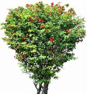 samll tree png images