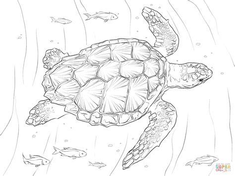 loggerhead turtle coloring page  printable coloring